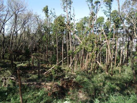 【台風19号の六国見山被害詳報】⓵森林公園内はまるで爆撃跡_c0014967_16311190.jpg