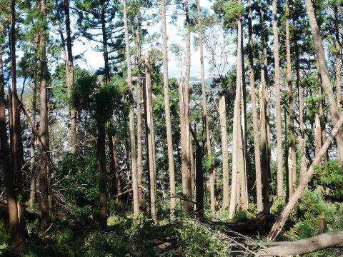 【台風19号の六国見山被害詳報】⓵森林公園内はまるで爆撃跡_c0014967_16312632.jpg