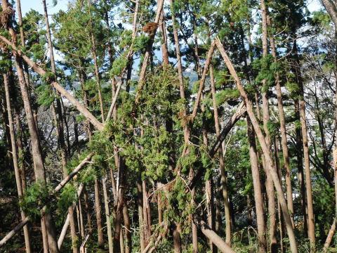 【台風19号の六国見山被害詳報】⓵森林公園内はまるで爆撃跡_c0014967_16313951.jpg