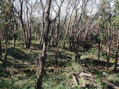 【台風19号の六国見山被害詳報】⓵森林公園内はまるで爆撃跡_c0014967_16315247.jpg