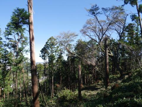 【台風19号の六国見山被害詳報】⓵森林公園内はまるで爆撃跡_c0014967_16333031.jpg