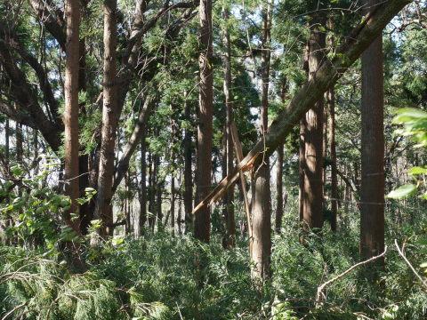 【台風19号の六国見山被害詳報】⓵森林公園内はまるで爆撃跡_c0014967_16365024.jpg