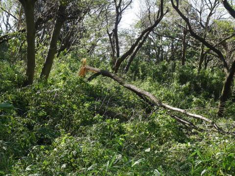【台風19号の六国見山被害詳報】⓵森林公園内はまるで爆撃跡_c0014967_16383088.jpg