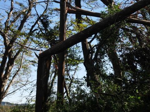 【台風19号の六国見山被害詳報】⓵森林公園内はまるで爆撃跡_c0014967_16400920.jpg