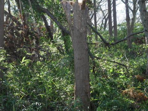 【台風19号の六国見山被害詳報】⓵森林公園内はまるで爆撃跡_c0014967_16402452.jpg