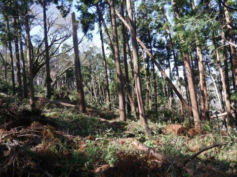 【台風19号の六国見山被害詳報】⓵森林公園内はまるで爆撃跡_c0014967_16404712.jpg