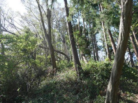 【台風19号の六国見山被害詳報】⓵森林公園内はまるで爆撃跡_c0014967_16412399.jpg