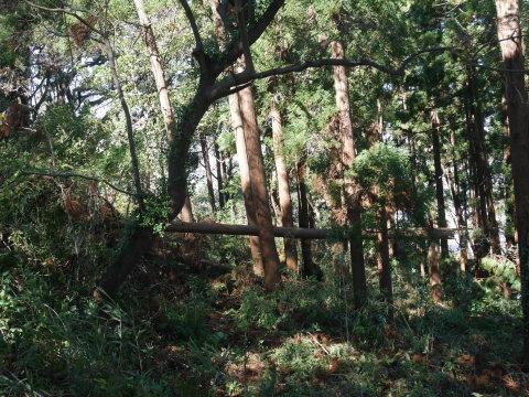 【台風19号の六国見山被害詳報】⓵森林公園内はまるで爆撃跡_c0014967_16415429.jpg