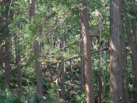【台風19号の六国見山被害詳報】⓵森林公園内はまるで爆撃跡_c0014967_16421358.jpg