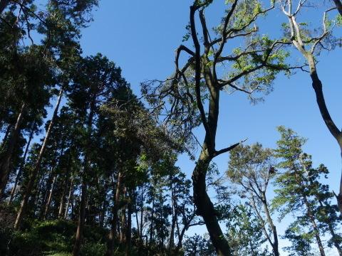 【台風19号の六国見山被害詳報】⓵森林公園内はまるで爆撃跡_c0014967_16434320.jpg