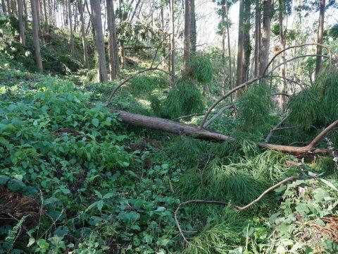 【台風19号の六国見山被害詳報】⓵森林公園内はまるで爆撃跡_c0014967_16472084.jpg