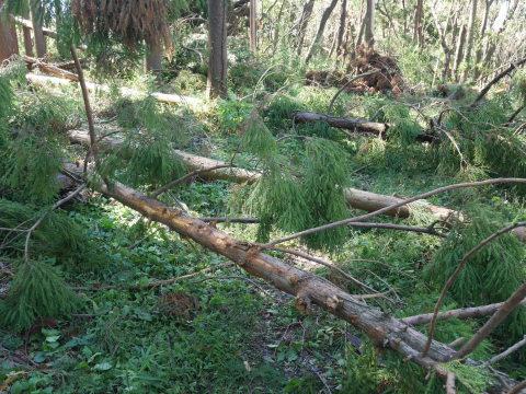 【台風19号の六国見山被害詳報】⓵森林公園内はまるで爆撃跡_c0014967_16483844.jpg