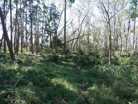 【台風19号の六国見山被害詳報】⓵森林公園内はまるで爆撃跡_c0014967_16494393.jpg