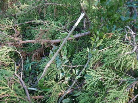 【台風19号の六国見山被害詳報】⓵森林公園内はまるで爆撃跡_c0014967_16520791.jpg