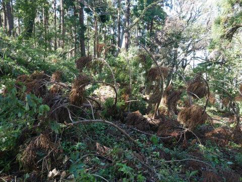【台風19号の六国見山被害詳報】⓵森林公園内はまるで爆撃跡_c0014967_16565783.jpg