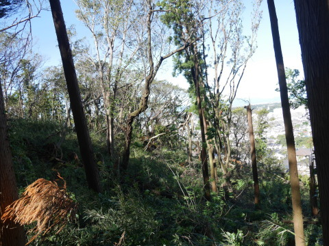 【台風19号の六国見山被害詳報】⓵森林公園内はまるで爆撃跡_c0014967_16593363.jpg