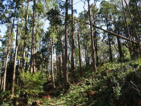 【台風19号の六国見山被害詳報】⓵森林公園内はまるで爆撃跡_c0014967_17062641.jpg