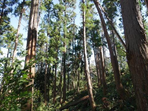 【台風19号の六国見山被害詳報】⓵森林公園内はまるで爆撃跡_c0014967_17065587.jpg