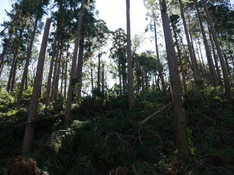 【台風19号の六国見山被害詳報】⓵森林公園内はまるで爆撃跡_c0014967_17083573.jpg
