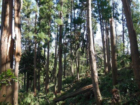 【台風19号の六国見山被害詳報】⓵森林公園内はまるで爆撃跡_c0014967_17084966.jpg