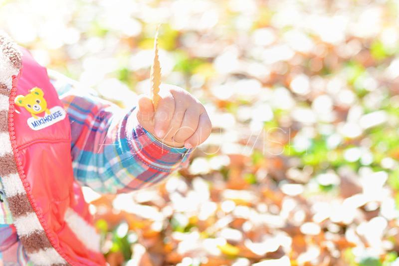 秋の撮影 始まりました!_f0215487_01284950.jpg
