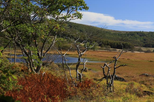 八島湿原⑥ 光る風 _a0357206_19341575.jpg