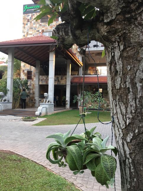 スリランカの想い出_f0024109_22200001.jpg