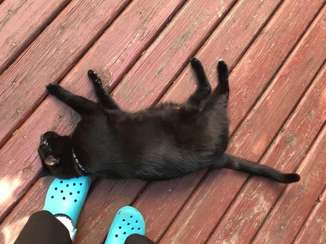 秋の日に🐈猫さんと遊ぶ_b0365715_08530402.jpg