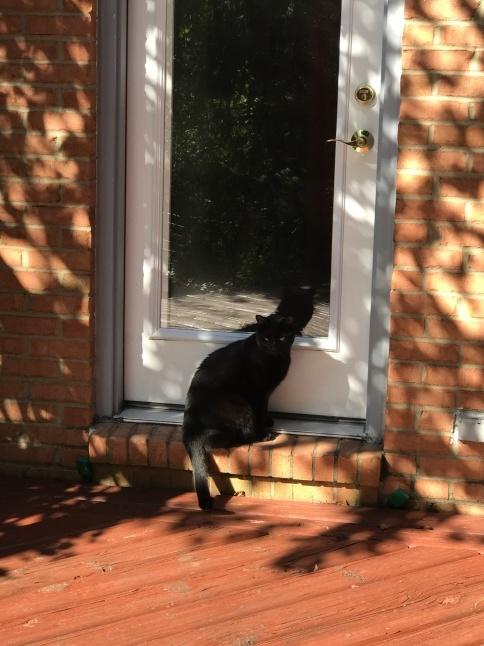 秋の日に🐈猫さんと遊ぶ_b0365715_08535500.jpg
