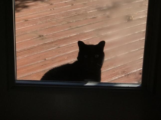 秋の日に🐈猫さんと遊ぶ_b0365715_08540726.jpg