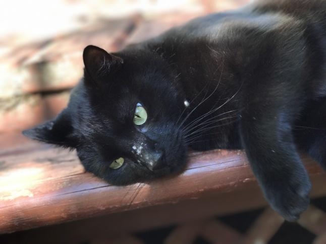 秋の日に🐈猫さんと遊ぶ_b0365715_08542043.jpg