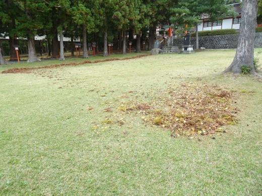 台風の置き土産対応_c0111229_21042655.jpg