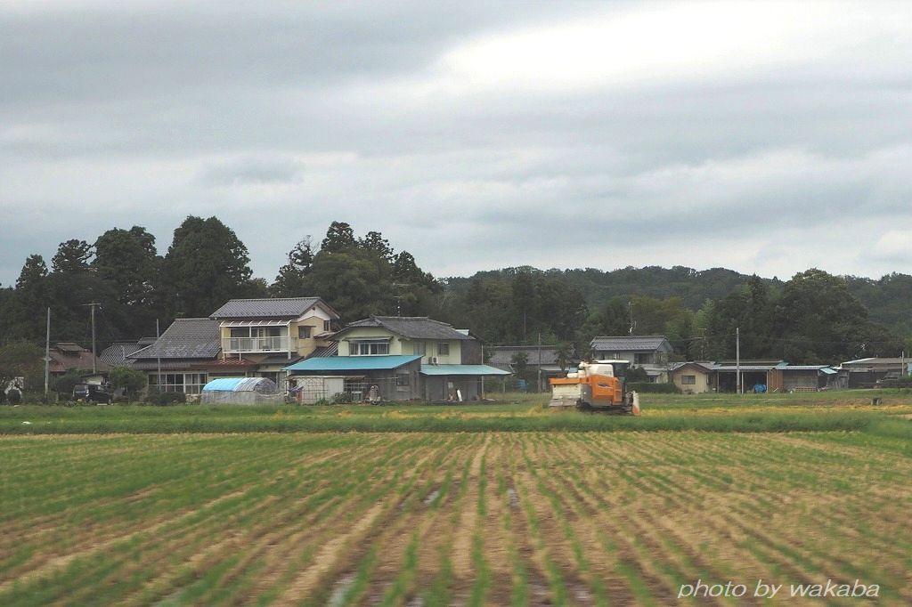 台風19号が来る前に急いでいる稲刈りです_e0052135_11112216.jpg
