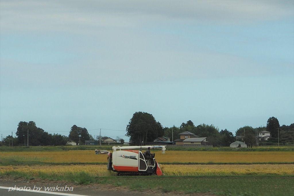 台風19号が来る前に急いでいる稲刈りです_e0052135_11112648.jpg