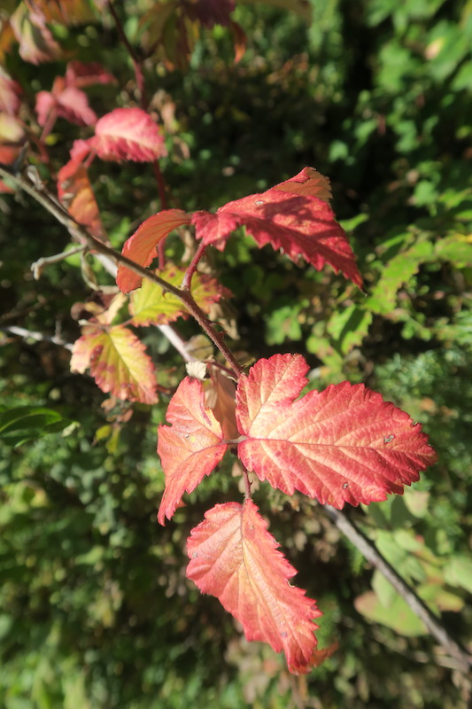 秋色の聖なる渓谷_f0234936_71779.jpg