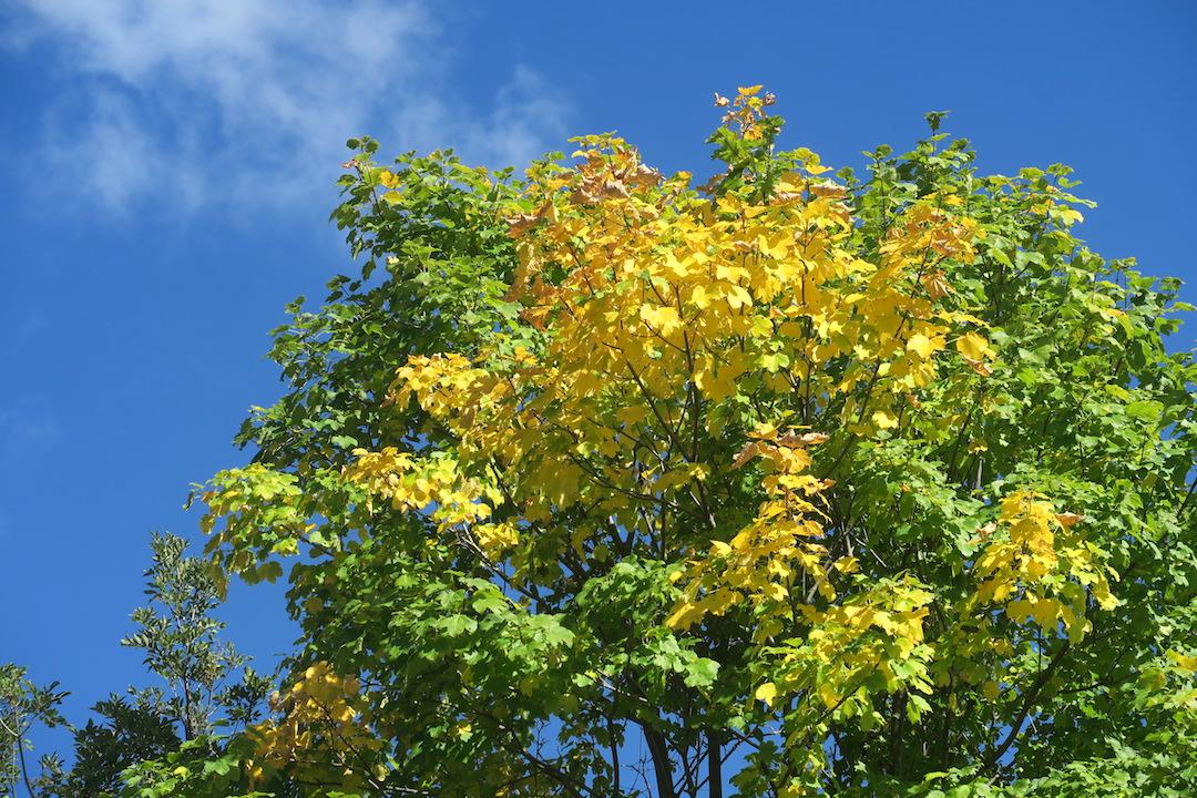 秋色の聖なる渓谷_f0234936_720945.jpg