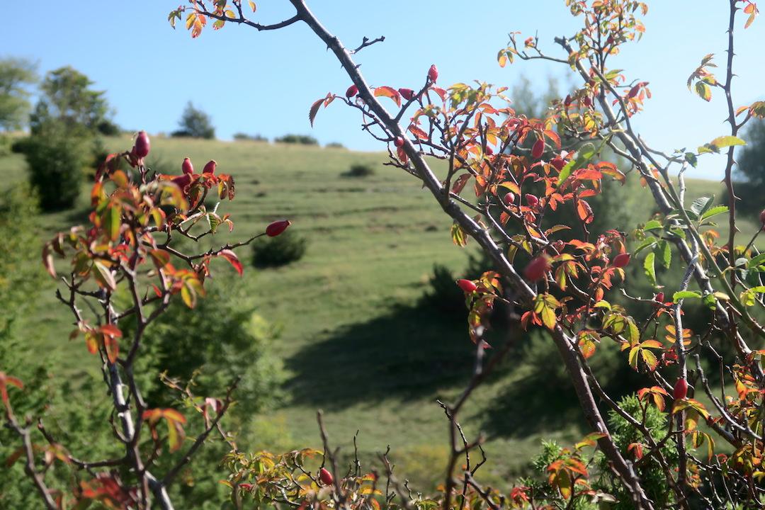 秋色の聖なる渓谷_f0234936_7224849.jpg