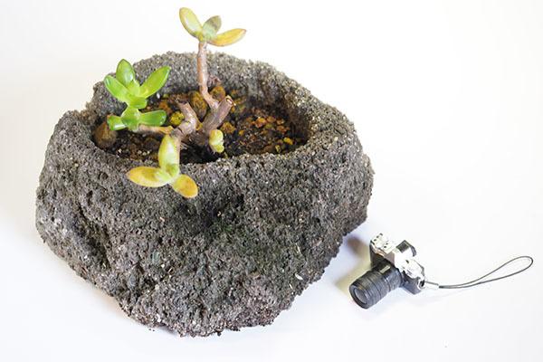 多肉植物の株分け刺し穂で楽しみます_e0022047_00062936.jpg