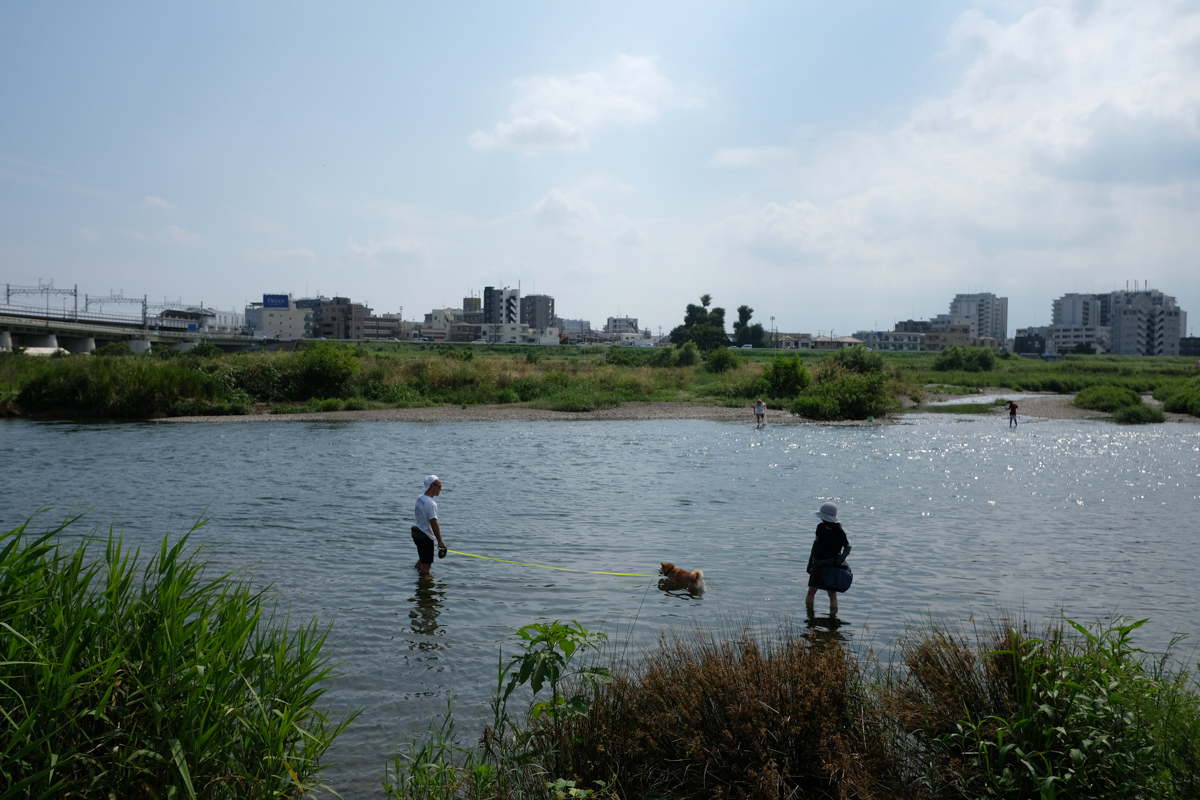 河原の楽しみ_c0084666_16150163.jpg