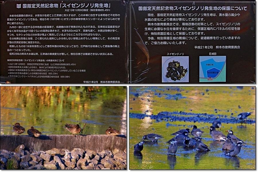 上江津湖をさるく(歩く)_d0102968_05341600.jpg