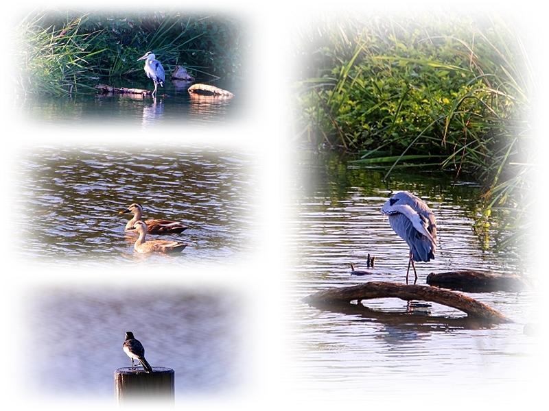 上江津湖をさるく(歩く)_d0102968_05341646.jpg