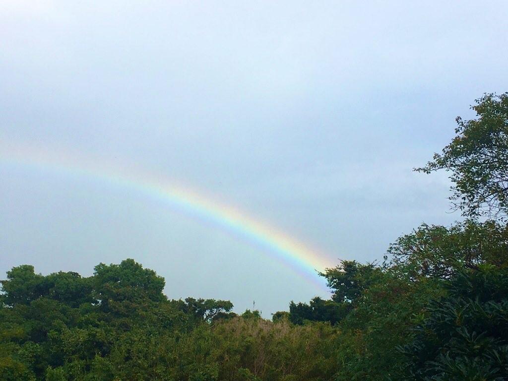 虹とパプリカ_c0344679_19281374.jpg