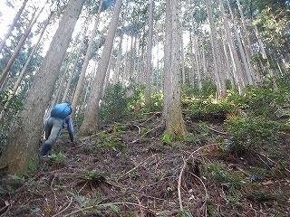 きっと何かある、美山の祢宜洞から神倉谷_e0064783_13592549.jpg