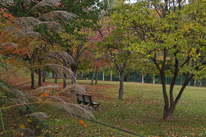 紅葉の季節_d0162994_09042283.jpg