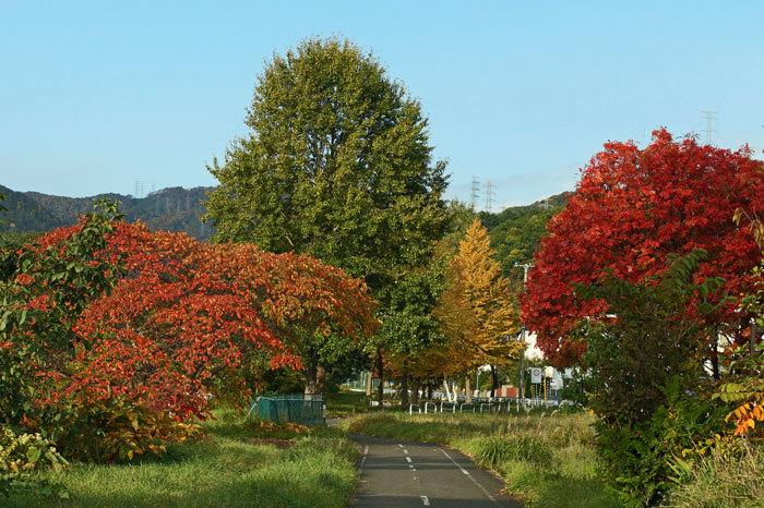 紅葉の季節_d0162994_09043564.jpg