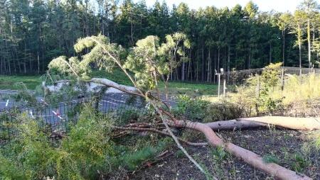 台風19号の影響について_c0193896_16100538.jpg