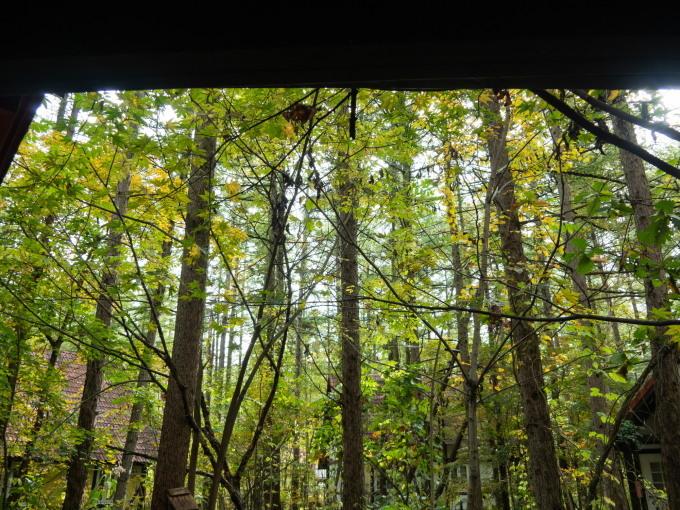 エゾリスと茸にシクラメン・・台風一過で冷え込み秋が深まります。_f0276498_22265765.jpg