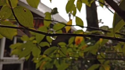 雨_a0061599_08184144.jpg