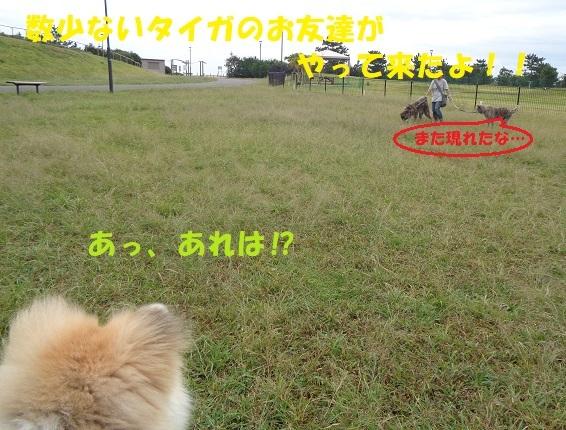 f0121712_21474281.jpg
