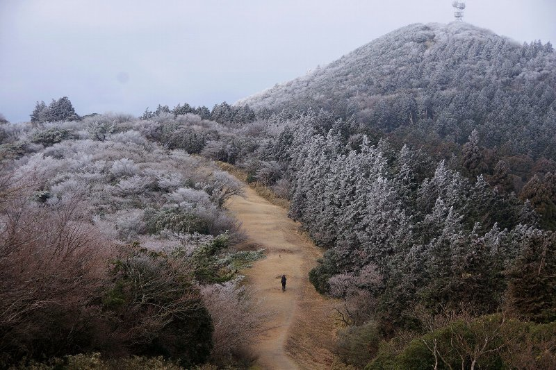 金冠山と達磨山、うなぎ_a0165316_09050355.jpg